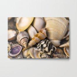 Sea Shell Vision Metal Print