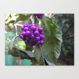 Beautyberry Canvas Print