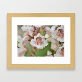 Blooming Chestnut Framed Art Print