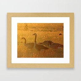 GOLDEN CAPTURE Framed Art Print