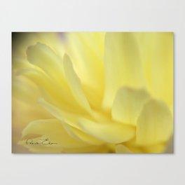 Mellow Yellow Peony Close up Canvas Print