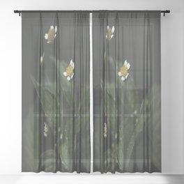 Botanical Still Life Chamomile Sheer Curtain