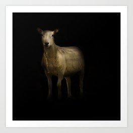 Ewe Portrait Art Print