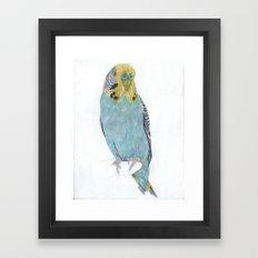 Budgie, commission Framed Art Print