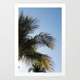 Palm Tree Leaves Pt. 2 Art Print