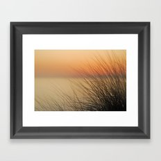 sea ​​urchins Framed Art Print