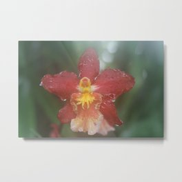 orchid fire Metal Print