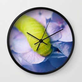 Actias Luna Larva on Hydrangea Nature Photo Wall Clock