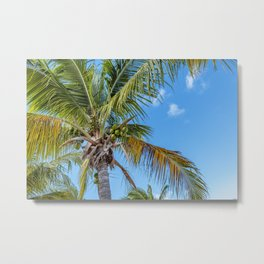 Coconuts Fresh From The Source Metal Print
