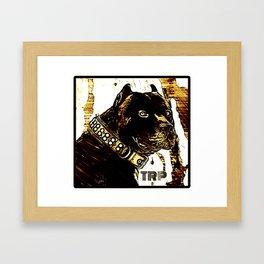 Pit Bull Models: Khan 03-01 Framed Art Print