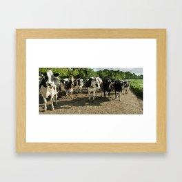 Cow panoramic Framed Art Print