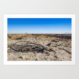 Uprooted Ocotillo Plant in the Middle of Dust and Rocks in the Anza Borrego Desert, California Art Print