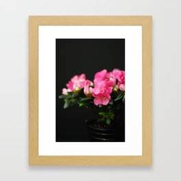 Flower - Pink & Black Framed Art Print