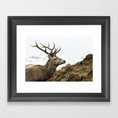 Royal Red Deer Stag Framed Art Print