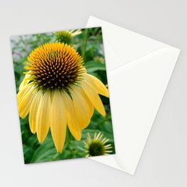 Yellow Echinacea/Coneflower Stationery Cards