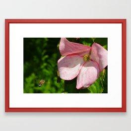 Dogwood and Bee Framed Art Print