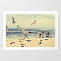 Seagulls Over Westhampton Beach Art Print