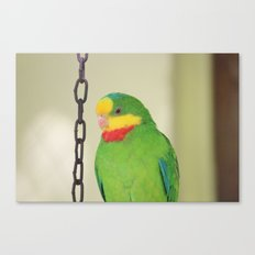 Chained Parrot Canvas Print