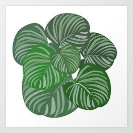 Calathea orbifolia Art Print
