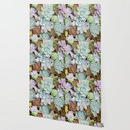 Pastel Succulent Garden Wallpaper