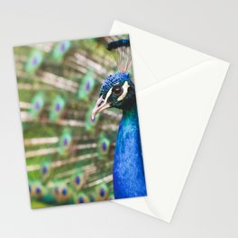 Peacock picture new Stationery Cards