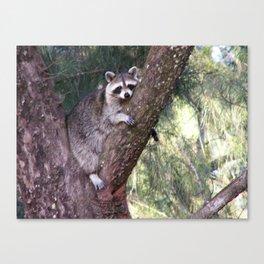 Lazy Raccoon Canvas Print