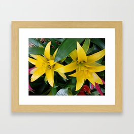 Yellow guzmania tropical flower Framed Art Print