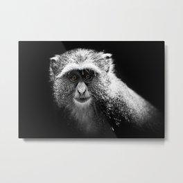 Vervet Monkey I Metal Print