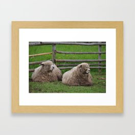 Herritage Farm Sheep Framed Art Print