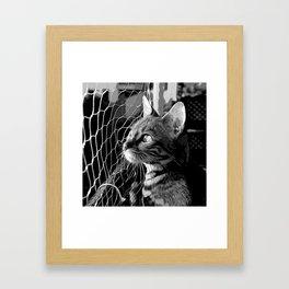 bengal cat yearns for freedom vector art black white Framed Art Print