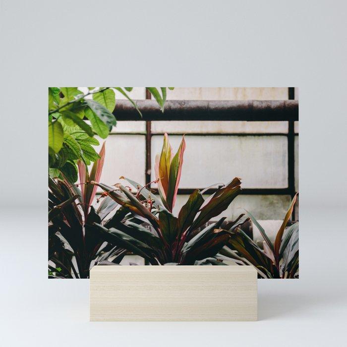 Hothouse Mini Art Print