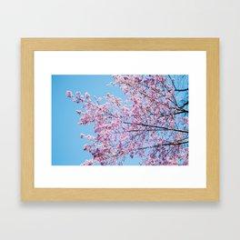 Sakura 05 Framed Art Print