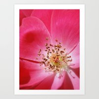 hot pink Art Prints featuring Hot Pink by Zayda Barros