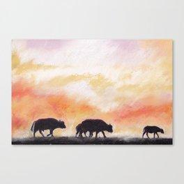 african buffalos Canvas Print