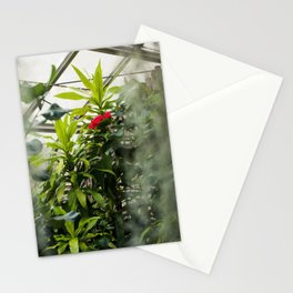 Hibiscus No. 1 Stationery Cards