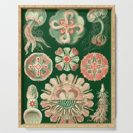 Ernst Haeckel Discomedusae Jellyfish Serving Tray