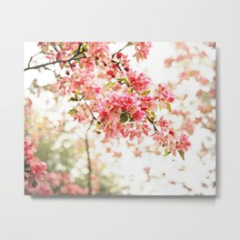 Vintage Inspired Pink and Green Apple Blossoms Metal Print