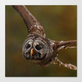 Owl~ Canvas Print