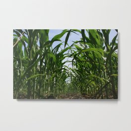 Corn Row Metal Print