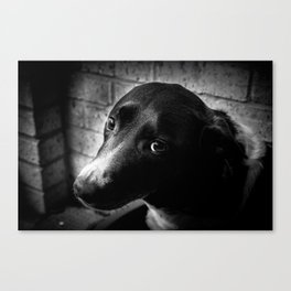 The Lonely Pooch Canvas Print