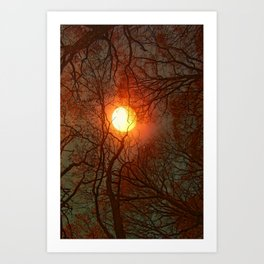 Sun and Trees and Trees and Sun Art Print