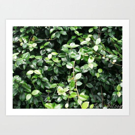 Wall of leaves Art Print