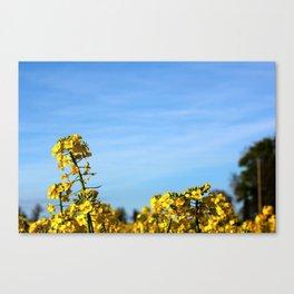 Sunny Day Canvas Print