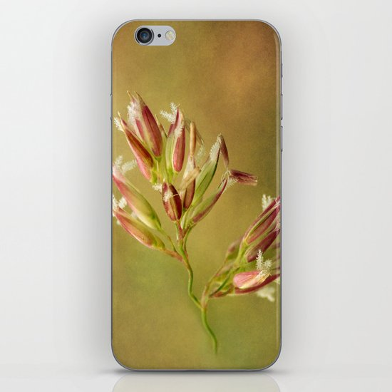 Canary Reed Grass Flowers iPhone & iPod Skin