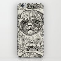 persian iPhone & iPod Skins featuring Persian Pug by Huebucket