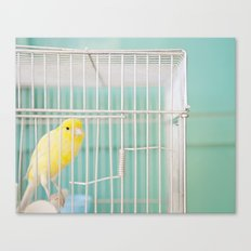 Yellow Bird against Turquoise Wall Canvas Print