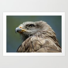 Black Kite Art Print
