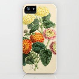 Lantanas Julius Caisar Adolphe Hivass iPhone Case