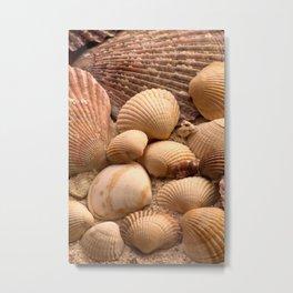 shells 2 Metal Print