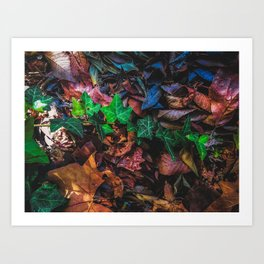 closeup green ivy leaves with brown dry leaves on the ground Art Print